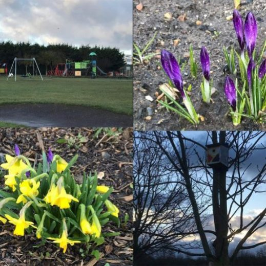 Four images of Hardie Park. Top left is of a children's play area. Top right is of irises growing. Bottom right is a bird house nailed to a tree at dusk. Bottom left is a bunch of daffodils growing.