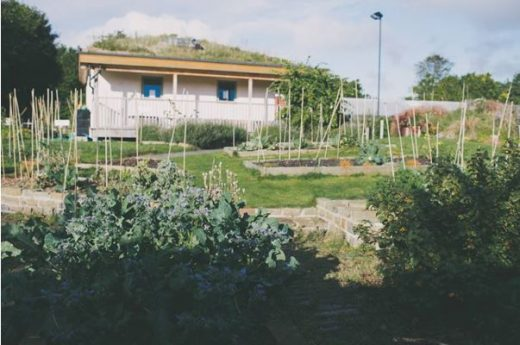 A range of allotments by the Outback in Halifax.